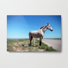 Horse in the Australian desert Metal Print