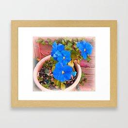 Little Blue Eyes. Framed Art Print