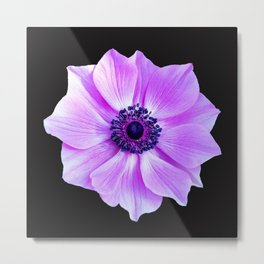 Purple Poppy Metal Print