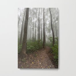 Smoky Mountain Summer Forest VIII - National Park Nature Photography Metal Print
