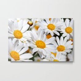 Daisy Flowers 0136 Metal Print