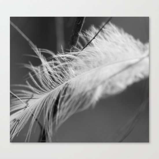 Lost Feather (Monochrome) Canvas Print