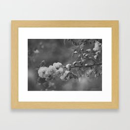 Sprung by Spring B+W Framed Art Print