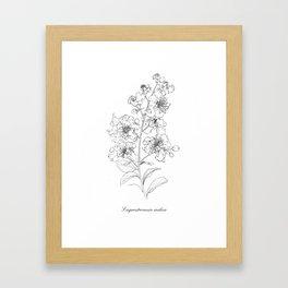 Lagerstroemia indica Framed Art Print