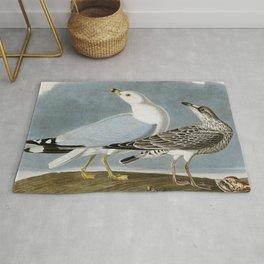 Vintage Seagull Illustration - Audubon Rug