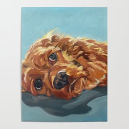 Newton the Lounging Cocker Spaniel Poster