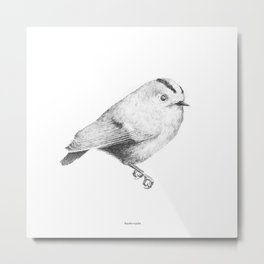 Goldcrest (Regulus regulus) - grey Metal Print