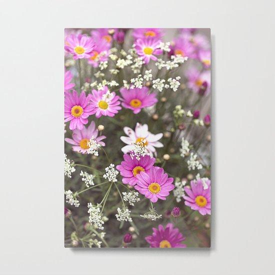 Pink Daisy Wildflower Summer Meadow Metal Print