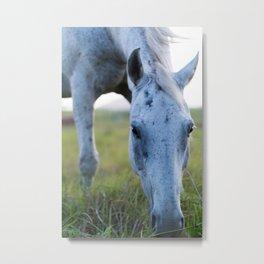 Bluey I Metal Print