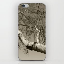 Birch tree #01 iPhone Skin