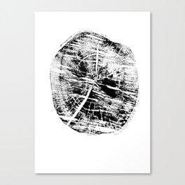 fragment birch Canvas Print