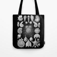 Sea Shells and Starfish (Thalamophora) by Ernst Haeckel Tote Bag