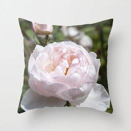 Pink Cabbage Rose Throw Pillow