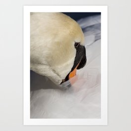 The Shy Swan Art Print