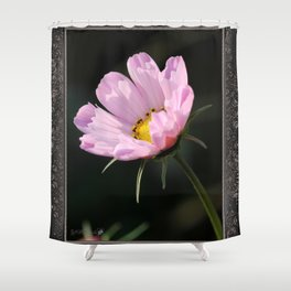 Cosmos named Sea Shells Pink Shower Curtain