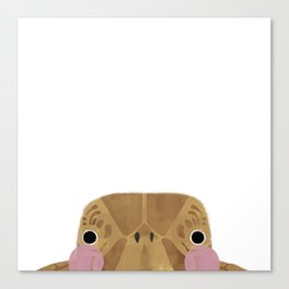 The Turtle Canvas Print