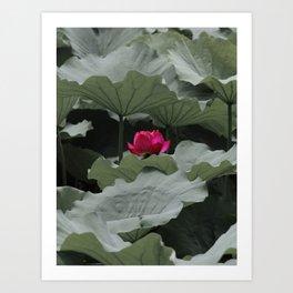 Nature's Pink Art Print