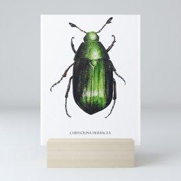 Mint beetle - Watercolour insect art print Mini Art Print