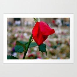 La Dernière Rose Art Print