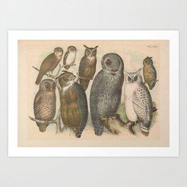 Naturalist Owls Art Print