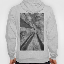Ghostly Trees Reaching For The Sky Hoody