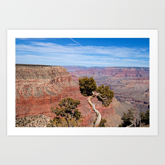 Grand Canyon Twisted Pine Art Print