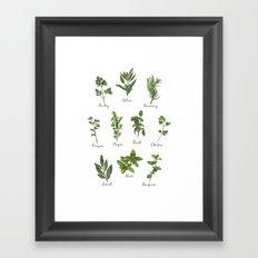 HERBS on white Framed Art Print