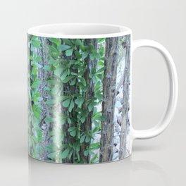 Ocotillo Fence Coffee Mug