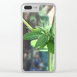 Cannabis Cluster Clear iPhone Case