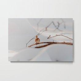 Vogel // Veluwe  Metal Print