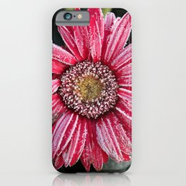 Frosty Pink Gerber Daisy iPhone Case