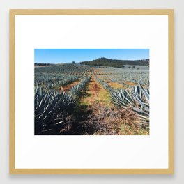 Agave Field   Jalisco, Mexico Framed Art Print