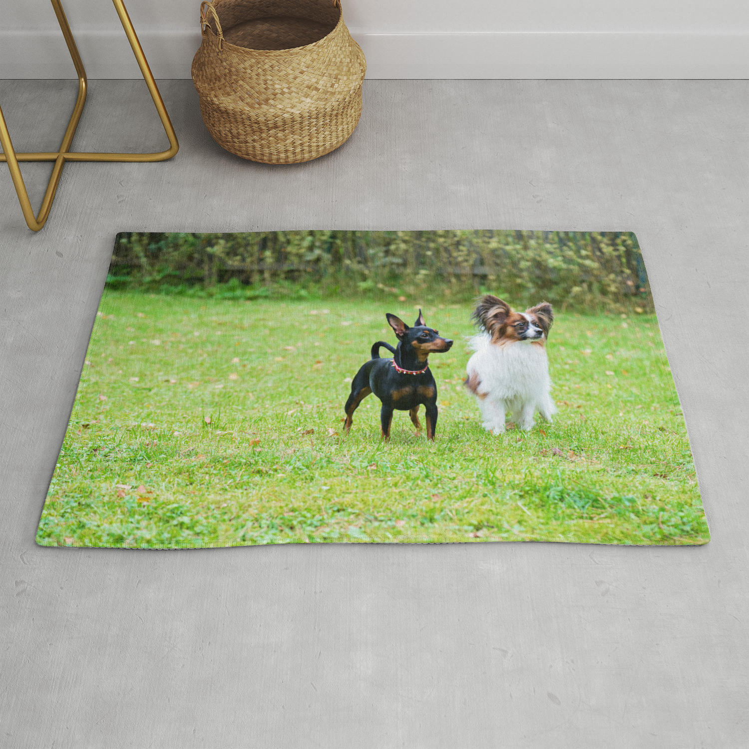 Outdoor Portrait Of A Miniature Pinscher And Papillon Purebreed Dogs On The Grass Rug By Anytka