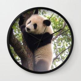 Chongqing Baby Giant Panda | Bébé Panda géant Wall Clock