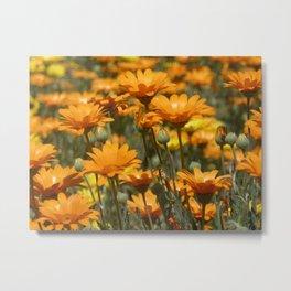Wild Flowers in Pala, CA Metal Print