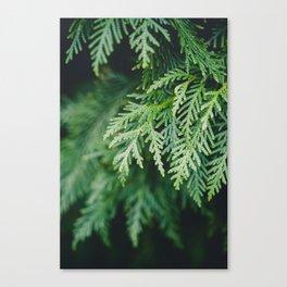 Christmas Green Canvas Print