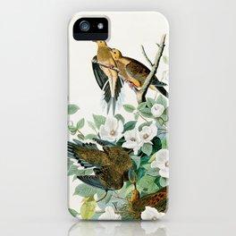 Carolina Turtle Dove, Birds of America by John James Audubon iPhone Case