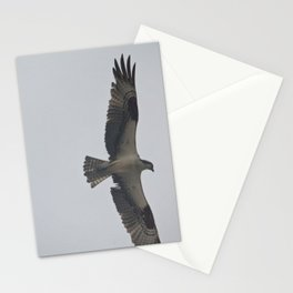 in flight Stationery Cards