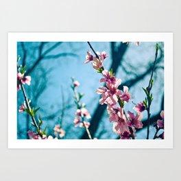 Spring has come Art Print