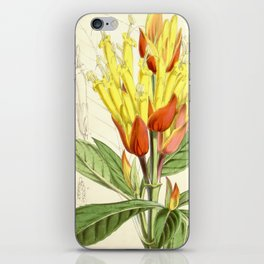 Sanchezia nobilis 5594 iPhone Skin