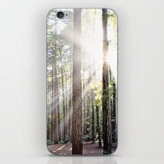 Sunburst Through the Redwoods iPhone & iPod Skin