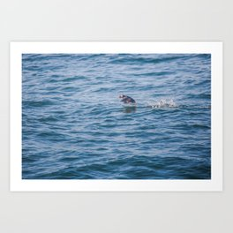 Cute Puffin takes off from the water Art Print