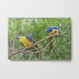 South American Couple of Parrots Metal Print