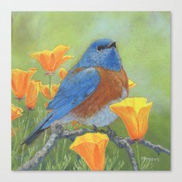 Western Bluebird Canvas Print