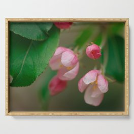 Apple Tree Blossoms Art Series Serving Tray