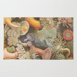 Anemones Rug