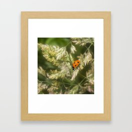 Ladybird Framed Art Print