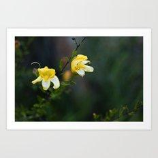 Flor de desierto  Art Print