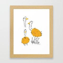 Ostriches Framed Art Print
