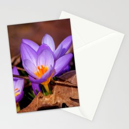 Concept nature : Et purpura claritate Stationery Cards
